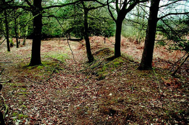 Deer boundary in Upper Keepers Valley - photograph Mike Hodder