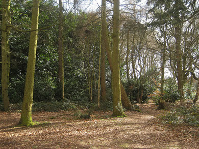 Jones Wood , Walmley by Manic Street Preacher/ Simon Li on flickr, image reusable under Creative Commons licence Attribution-NonCommercial-ShareAlike 2.0 Generic (CC BY-NC-SA 2.0)