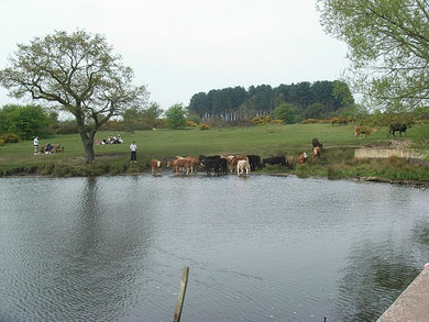 Longmore Pool is fed by Longmore Brook. The dam is just visible in the foreground on the right.