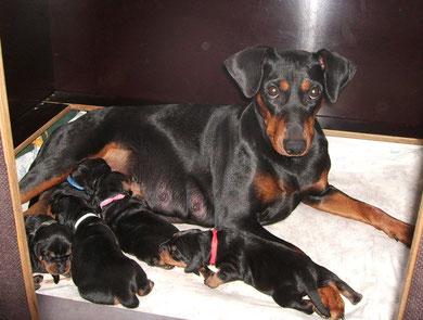 Stolze Mama Geeva bei ihren 2 Wochen alten Welpen ;-)
