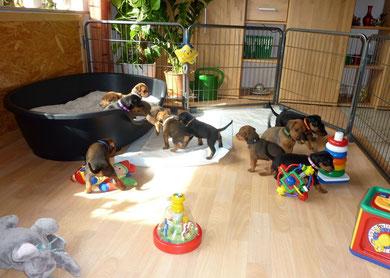"""Unsere """"Kleinen"""", ziehen  ab ca. 3-4 Wochen, ins Wohnzimmer."""