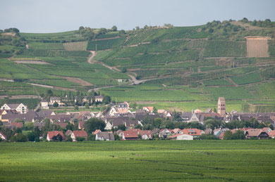 Sigolsheim today with Hill 351 in the back 2012 (Photo courtesy Katrin Raabe)
