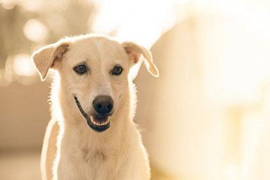 Le chien et l'estime de soi