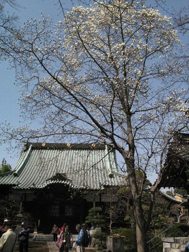 本村町 三佛寺
