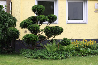 gartenbonsai grueneecke gr neecke garten bonsai gartenbonsai. Black Bedroom Furniture Sets. Home Design Ideas