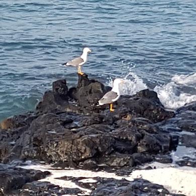 Wlodarek - Seemöven blicken auf das Meer