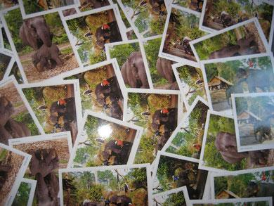 Postkarten mit dem Motiv von Elefanten: Elefanten bedeuten übrigens Weisheit, Kraft, Klugheit und in China bedeutet ein Elefant Scharfsinn, Energie und Souveränität.