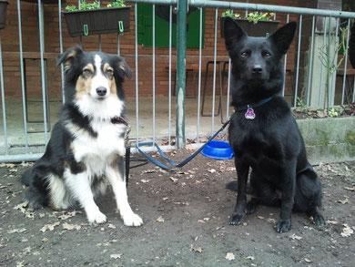 Bella 3 Jahre und Ayra 1 1/2 Jahre