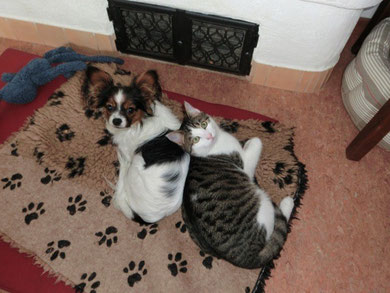 Mony mit Katze