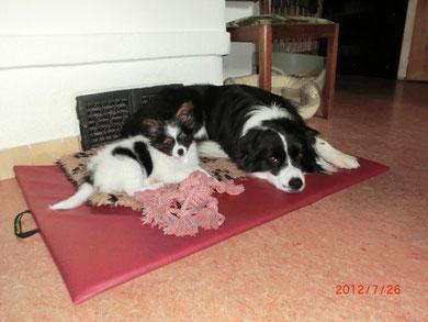 Mony und Vinc beim kuscheln