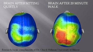 """Bessere Gehirnaktivität mit """"Walking and Talking"""" - Studie untermauert dieses Konzept"""