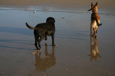 Edward et Gala, en vacances, au bord de la mer