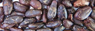 geröstete und geschälte Kakaobohnen