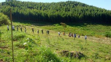 Regenwaldaufforstung