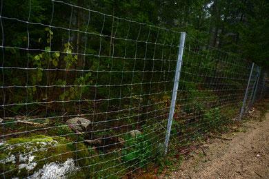 Der Zaun ist um die 2m hoch und mehrere Kilometer lang