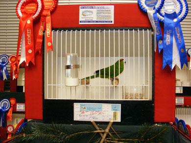Der Siegervogel