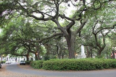 Foto In Savannah