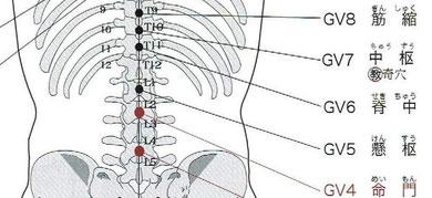 督脈:脊中