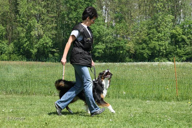 In den Sporthundegruppen der Hundeschule Matte werden Hund und Mensch auf Sporthundeprüfungen der Sparte Begleithunde I-III vorbereitet. Unterordnung, Führigkeit und Nasenarbeit (Fährten/Revieren) wer