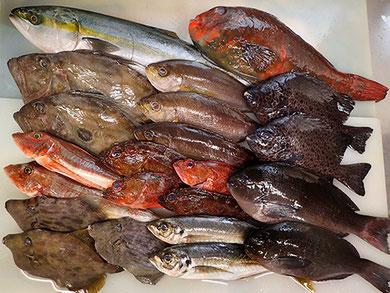 未利用魚 積極利用 宅配寿司