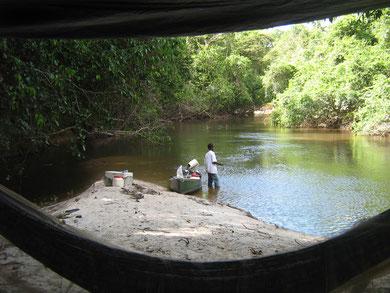 randonnée et découverte de la nature en guyane: balade en crique