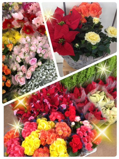 地元の方はもうご存知かと思いますが、明日・明後日は!!アルプラザ鯖江特招会があります(^ ^) 花ひろアルプラザ店でも毎回恒例の大変お買い得な花鉢袋や 特招会限定価格のプリザーブドフラワー、光触媒アートフラワーをご用意しております*\(^o^)/* いい夫婦の日(11月22日)やX'masのプレゼントにもオススメですっ♪ どれも数に限りがありますので、お早めに♪ その他にも多数、お買い得な商品を取り揃えておりますので、来てからのお楽しみに~*\(^o^)/*