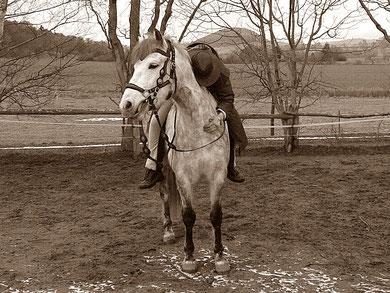Dankbarkeit Pferd