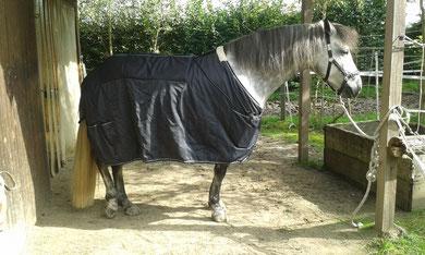 Magnetfeldtherapie Pferd