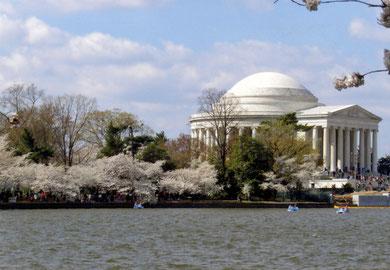 ポトマック河畔の桜並木