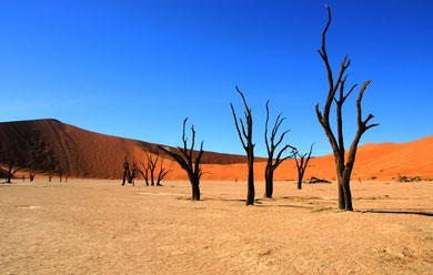 Dead Vlei in der Wüste Namibias