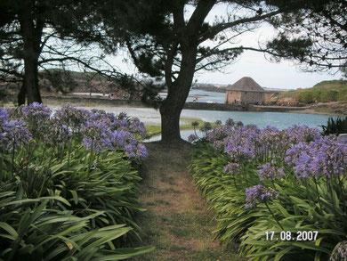 L'île de Bréhat au climat doux ,le moulin à marée,  agapanthes , palmiers, plantes exotiques