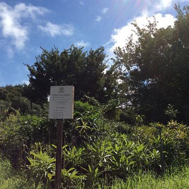 南アフリカ太古の森 森林再生事業 SDGs