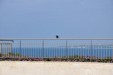 美ら海水族館の外で見かけた、美しい青い鳥