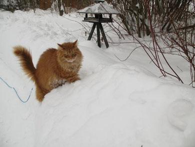 ganz schön anstrengend ,das kraxeln im Schnee !