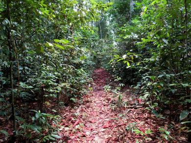 ジャングルの奥へと続く小径。