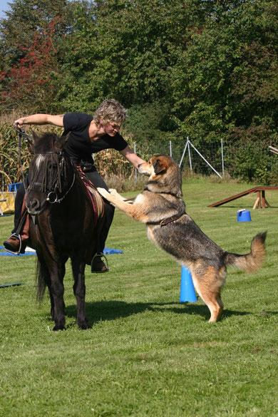 Nanuk - Schäfer-Husky-Mix. Sabine Lang war bei unserem Sommerfest und zeigte uns Horse and Dog Trail. Nanuk war Sabines ganzer Stolz