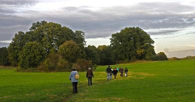 Wanderweg zwischen den im Wald versteckten Hünengräbern bei L.-Granitz