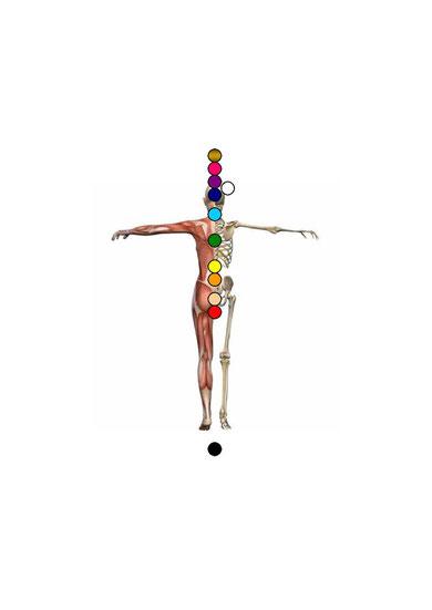 Der Sitz der einzelnen 12 Energiezentren am menschlichen Körper.