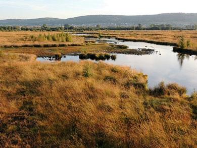 Internationaler Naturpark Bourtanger Moor
