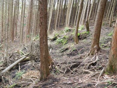 人工林内部