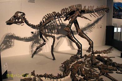 むかわ竜骨格と床に並べられた標本