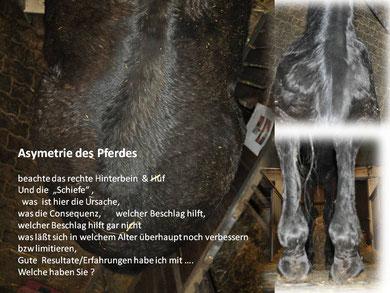 Asymetrie eines Pferdes