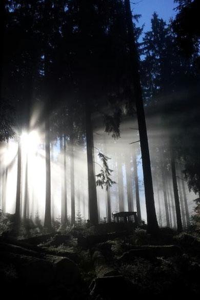 Der Waldtraum