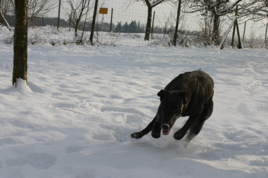 """Harry ist jetzt ein halbes Jahr alt.Und ein echtes """"Schneemonster""""!"""