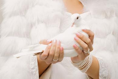 Weiße Taube in Hand der Braut