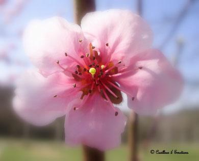 bouquet1 2009