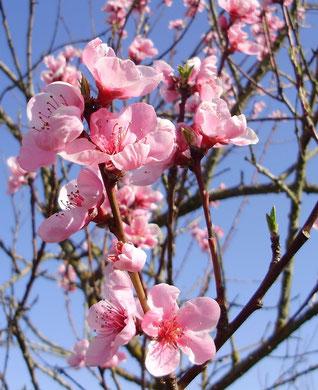 serie bouquet printemps2009