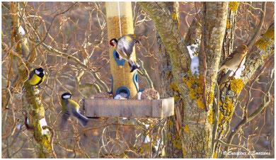 oiseaux suite