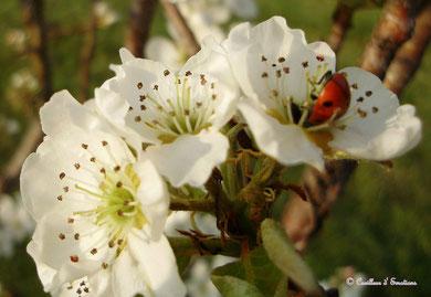 bouquet5 2009