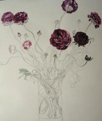 Ranunculus Asiatica ラナンキュラス